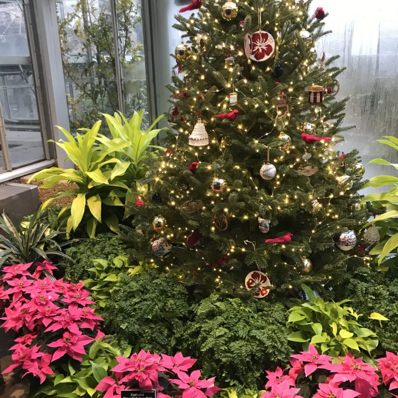 Local Treasure :: The Holidays at the U.S. Botanic Garden